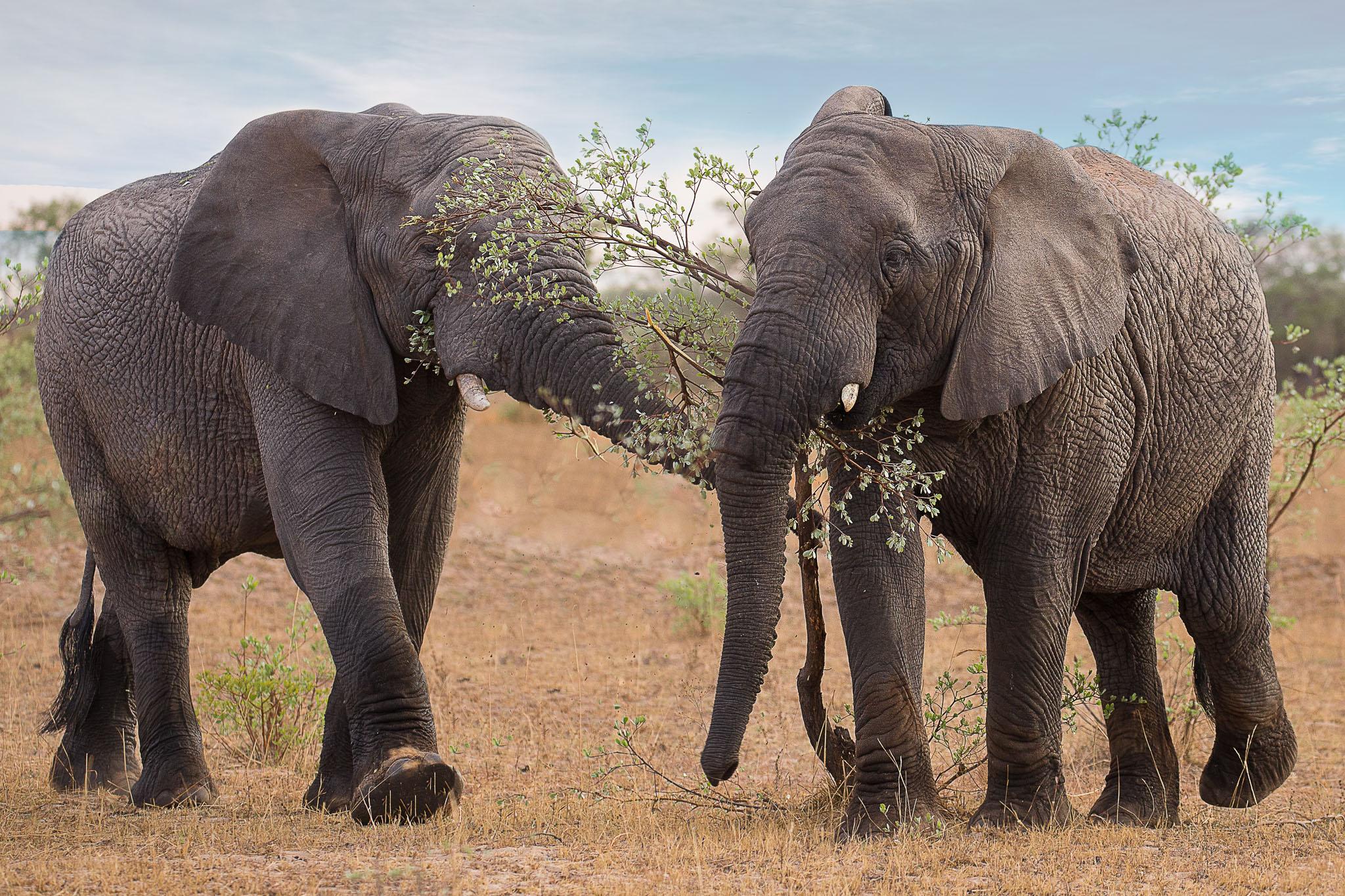 Elephants ~ Entabeni, South Africa