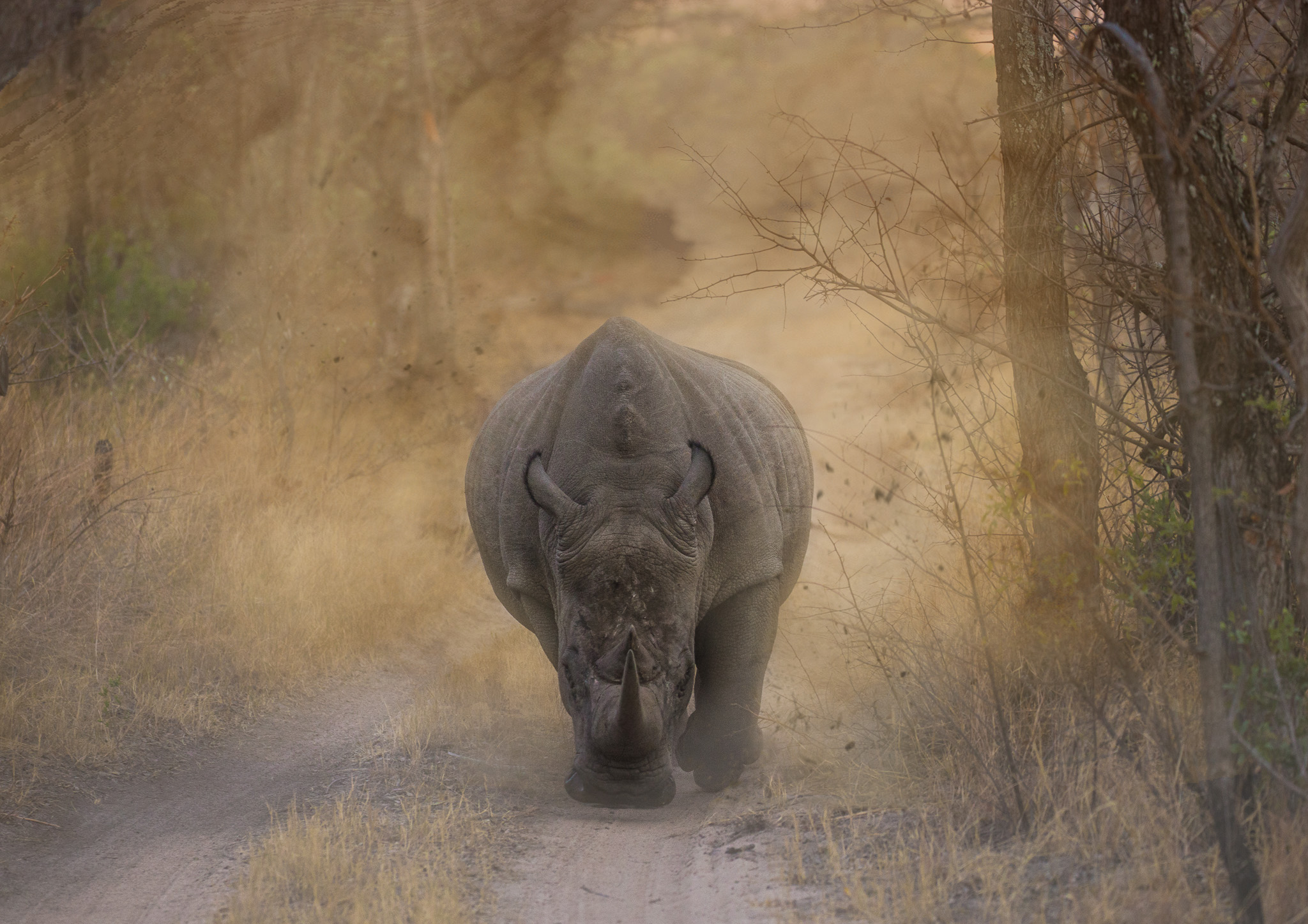 Rhinocerous ~ South Africa