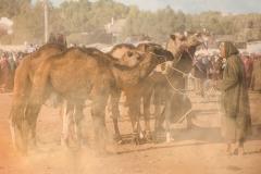 Had Draa Camel Fair ~ Morocco