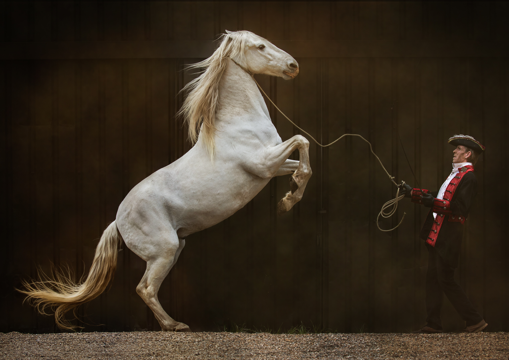 The Trainer ~ Andalusian
